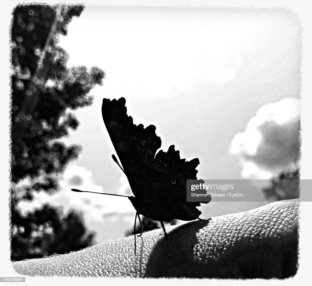 Close Up Of Butterfly On Human Hand : Foto stock