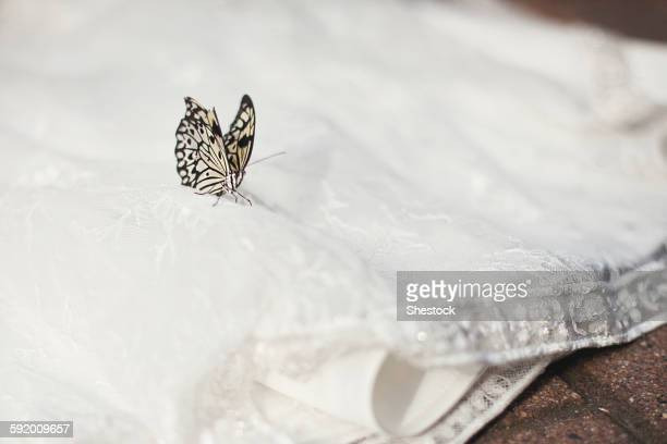 close up of butterfly on wedding dress - lace textile stock pictures, royalty-free photos & images