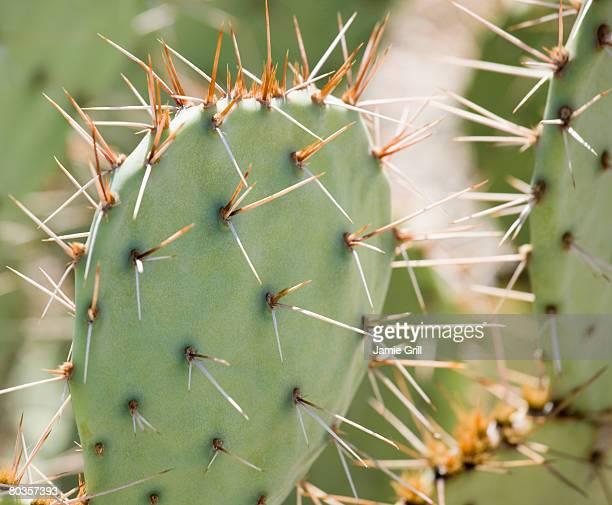 close up of cactus, arizona, united states - espinho característica da planta - fotografias e filmes do acervo