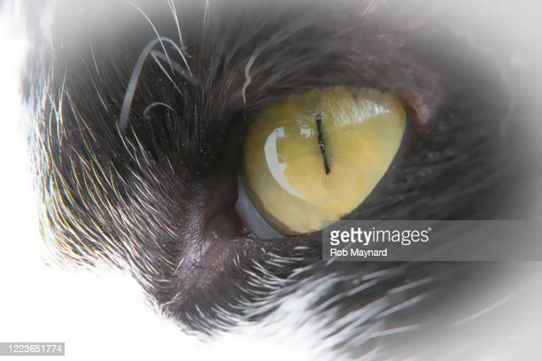 close up of cat eye - publisher stock pictures, royalty-free photos & images