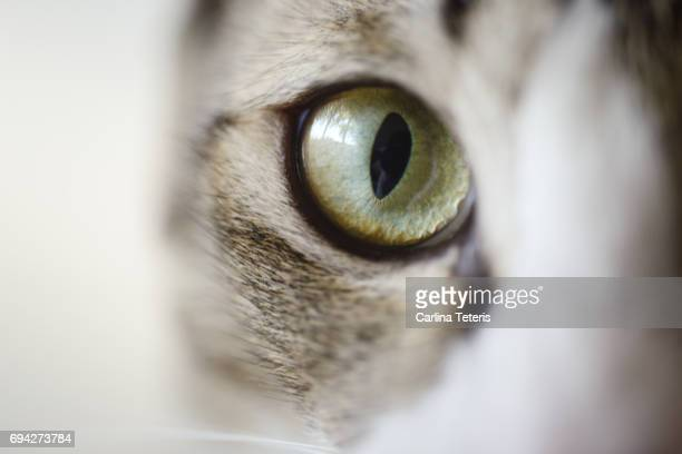 Close up of cat looking into camera