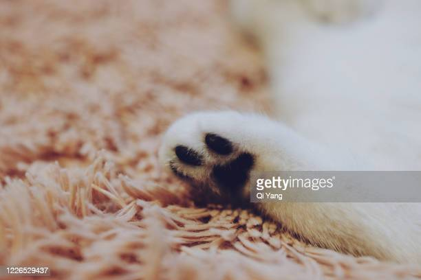 close up of cat paw - carpet stock pictures, royalty-free photos & images