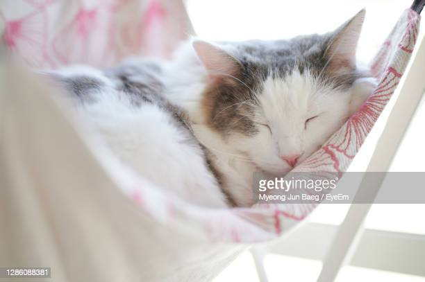 close up of cat sleeping on hammock beside window at home - animal hair stock pictures, royalty-free photos & images