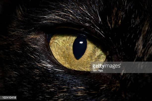 Close up of cat's eye.