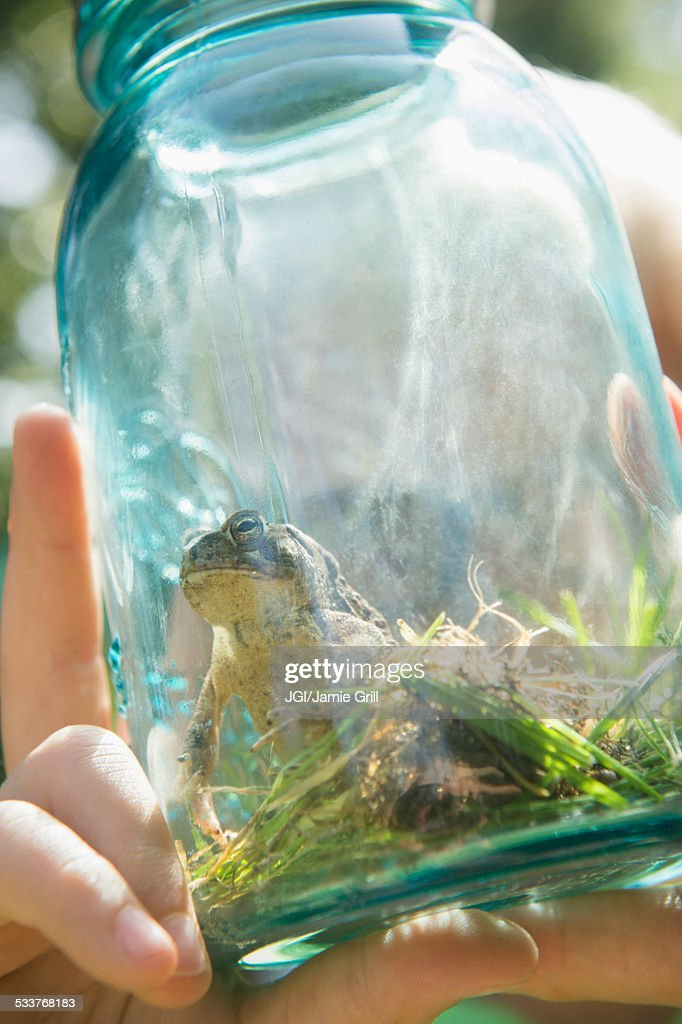 Close up of Caucasian boy holding jar with frog : Foto stock