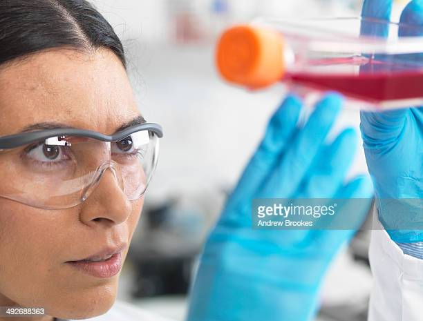 Close up of cell biologist holding a flask containing stem cells, cultivated in red growth medium, to investigate disease