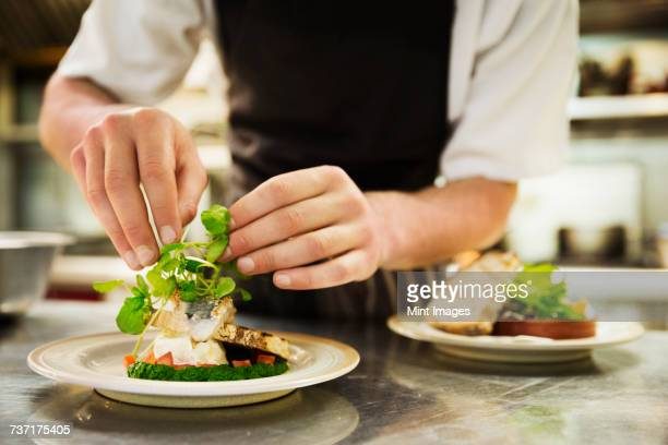 Close up of chef in kitchen adding salad garnish to a plate with grilled fish.