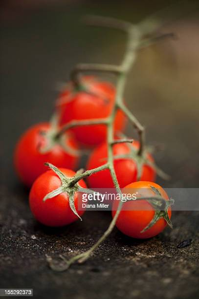 close up of cherry tomatoes on vine - ripe stock pictures, royalty-free photos & images