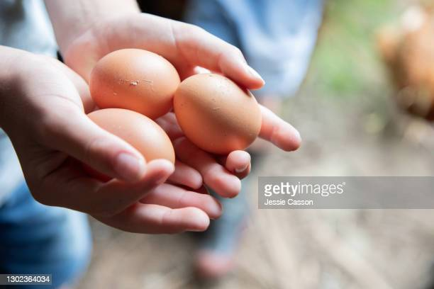 close up of child's hand holding eggs - animal egg stock pictures, royalty-free photos & images