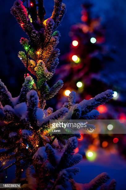 クローズアップ夜のクリスマスツリーの