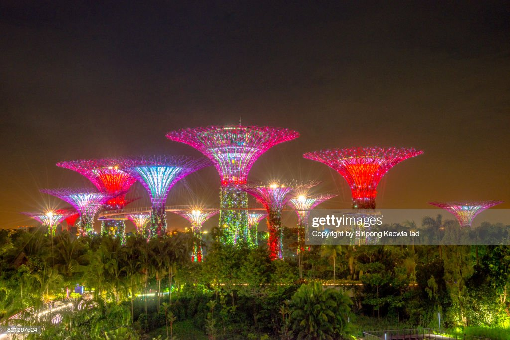 Close up of colorful lighting show that is illuminated the Super Trees Groove and the trees inside the Garden by the bay at night. : Stock Photo
