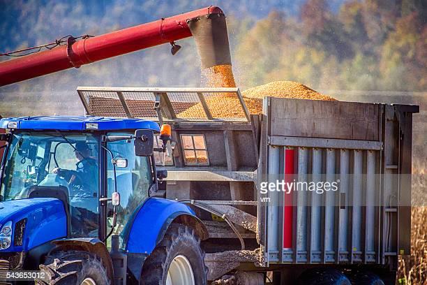 Nahaufnahme einer Füllung aus einem Traktor-Anhänger mit Mais
