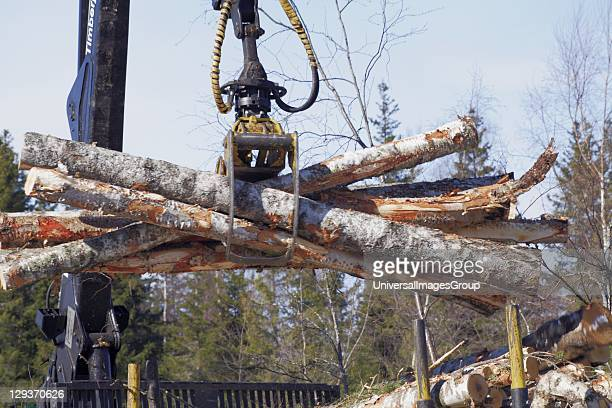 Close up of cut logs being loaded onto trailer for transportation to paper mill Ostrobothnia Finland