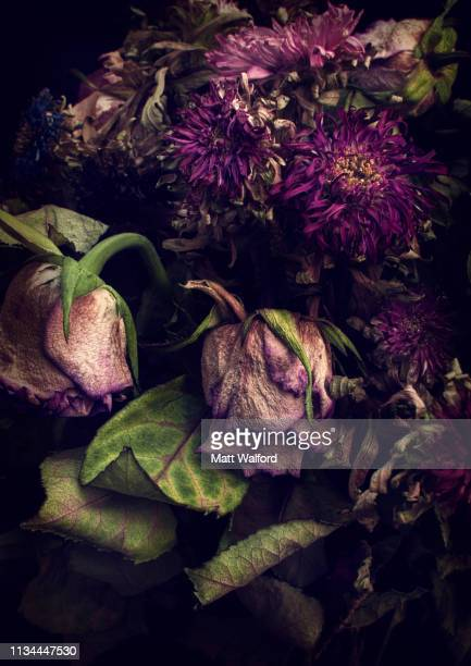 close up of decaying flowers - decay stock pictures, royalty-free photos & images
