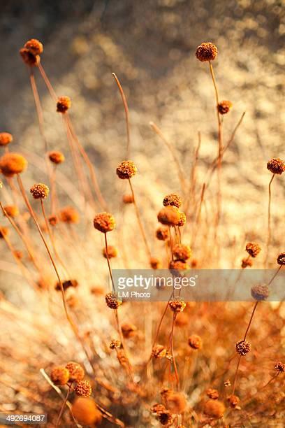 Close up of desert flowers