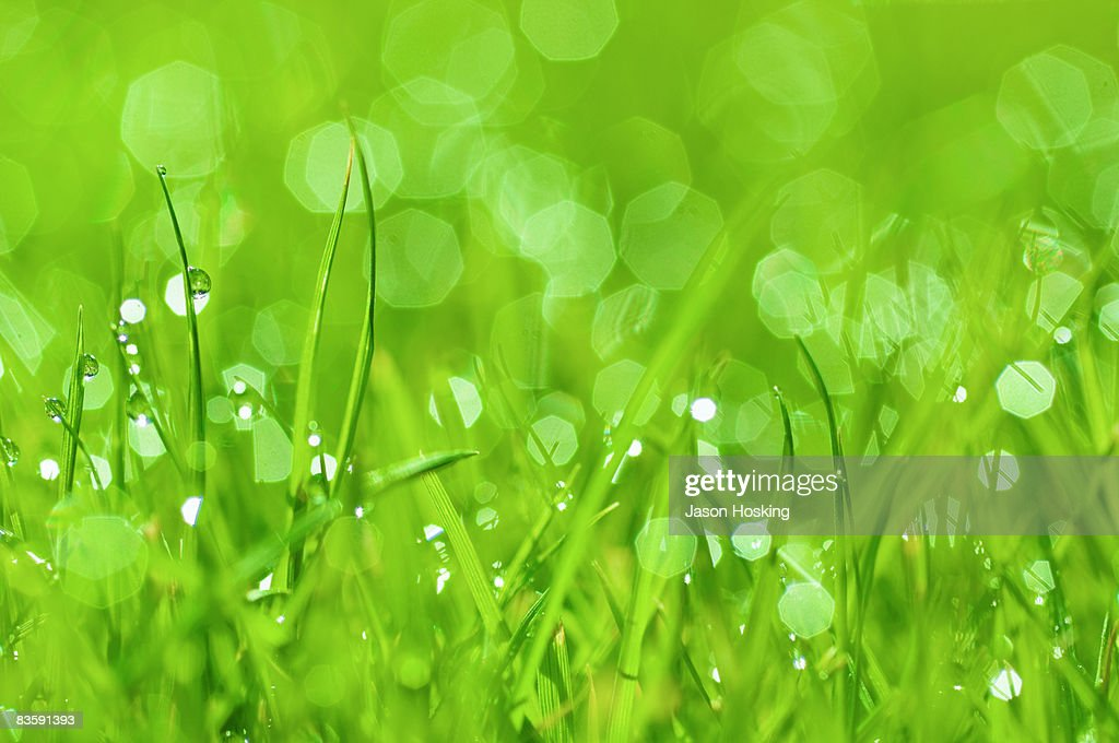 Close Up Of Dew Drops On Lush Blades Of Grass Stock Photo Getty Images
