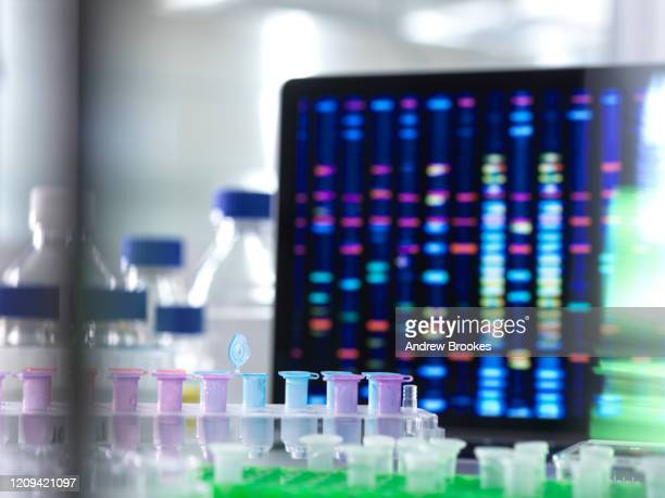 close up of dna samples  in microcentrifuge tubes during an experiment in the laboratory with the dna profile on the monitor screen. - genetic research stock pictures, royalty-free photos & images