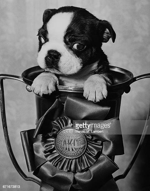 close up of dog in trophy - pawed mammal stock pictures, royalty-free photos & images