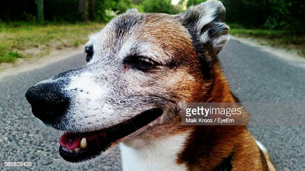 close up of dog sitting on road - köpenick stock pictures, royalty-free photos & images