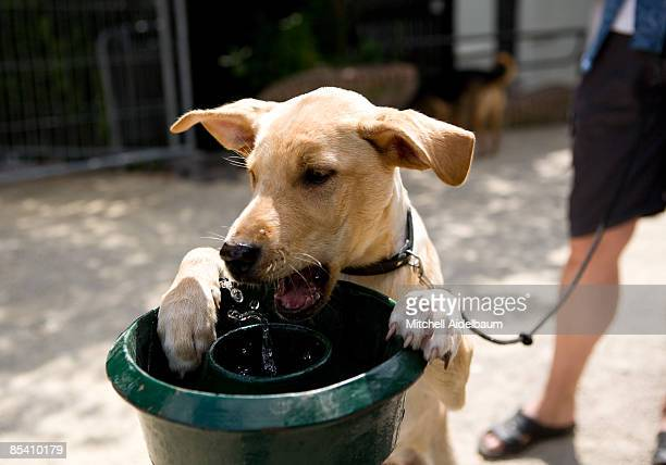 close up of dog with water fountain - vertebrate stock pictures, royalty-free photos & images