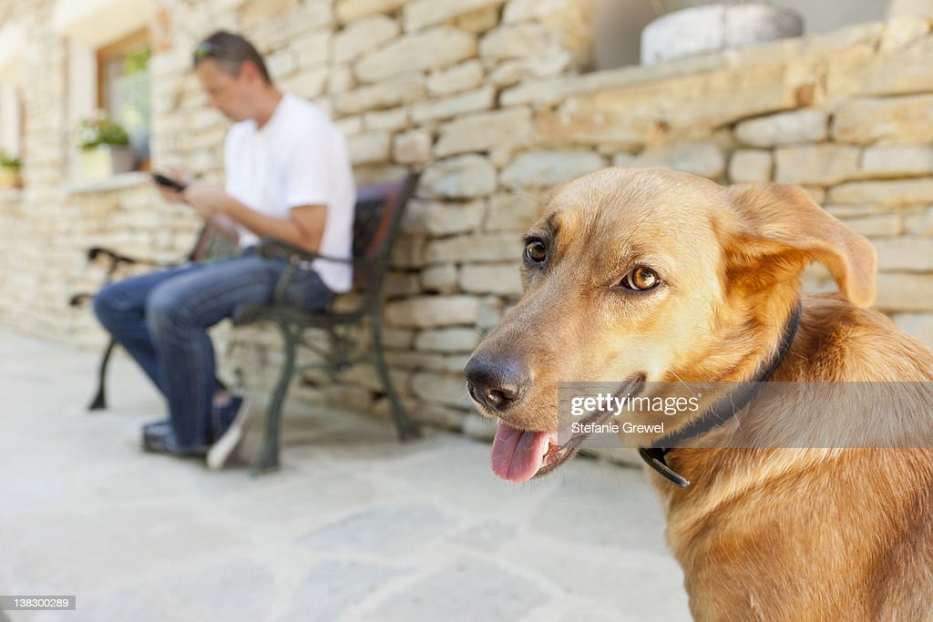Close up of dog's panting face : Stock Photo
