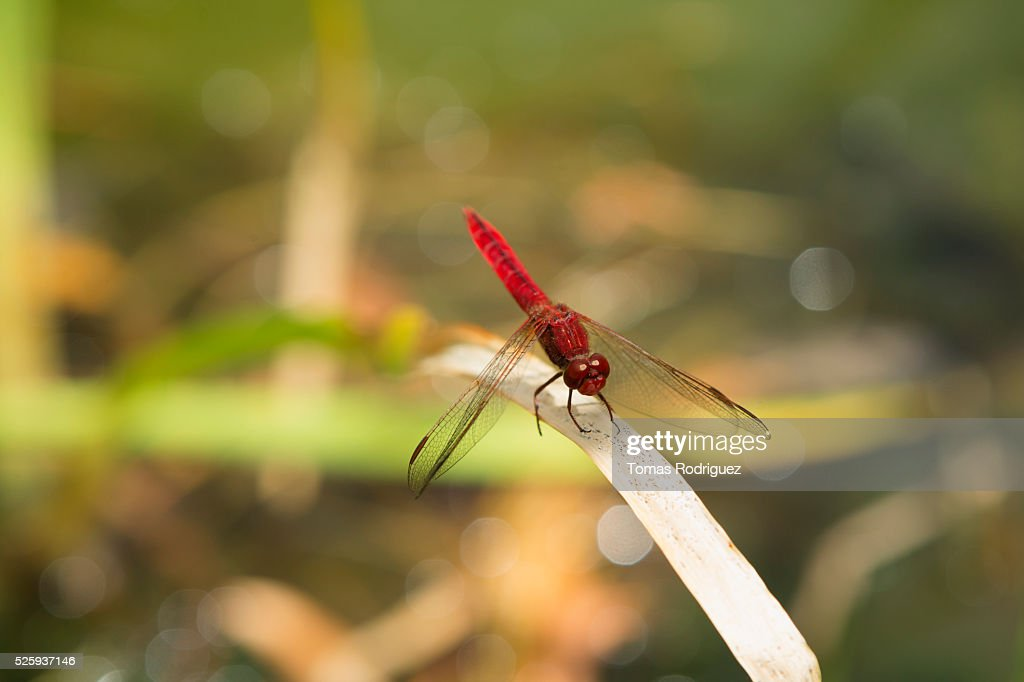 Close up of dragonfly leaf : Stockfoto