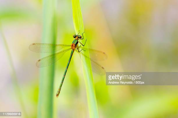 Close up of dragonfly on leaf