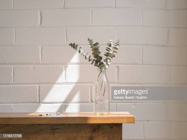 close up of dried eucalyptus leaves in glass bottle on wooden shelf against painted white brick wall - vase stock-fotos und bilder