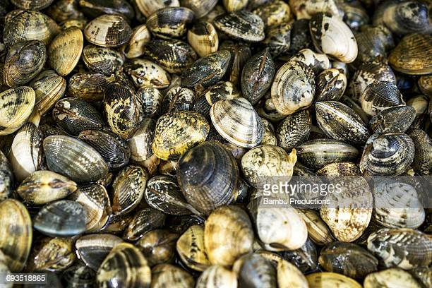 close up of edible shells in nazare, portugal - limpet stock pictures, royalty-free photos & images