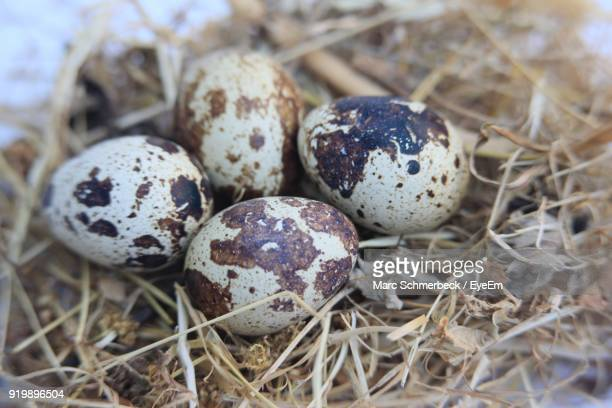 Close Up Of Eggs In Nest