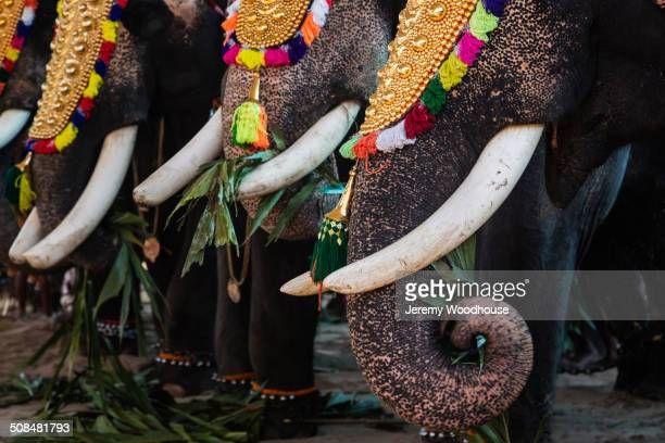 Close up of elephants wearing decorations