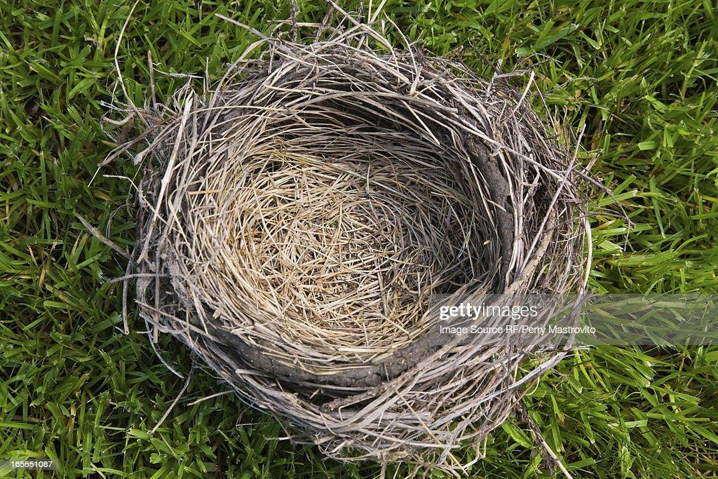 Close up of empty nest : Stock Photo