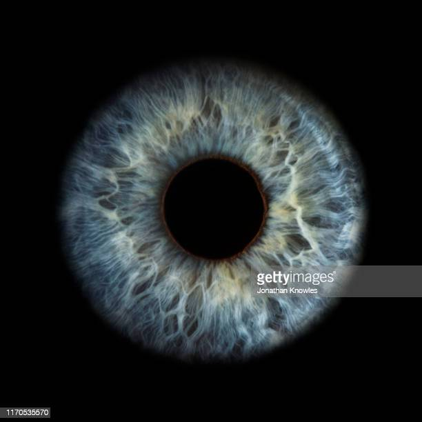 close up of eye - blue eyes stock pictures, royalty-free photos & images