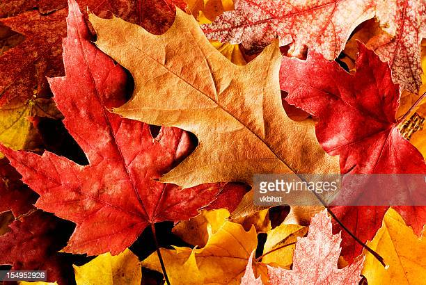 Close up of fallen autumn leaves