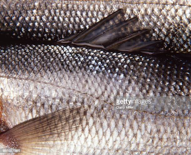 close up of fish scales - animal scale stock pictures, royalty-free photos & images