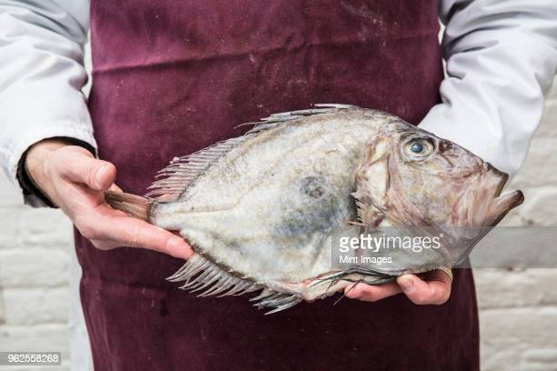 Close up of fishmonger wearing apron holding a fresh John Dory fish.