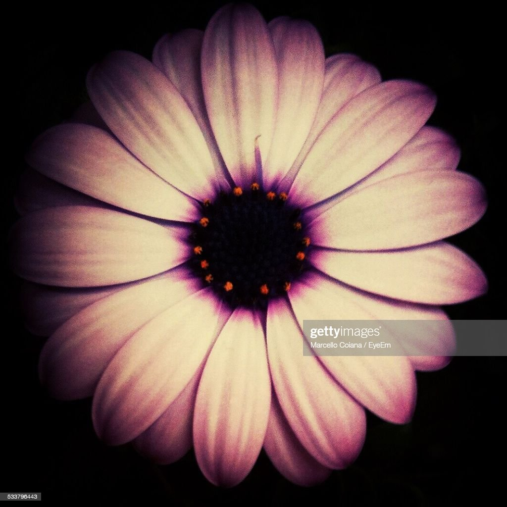Close Up Of Flower Head : Foto stock