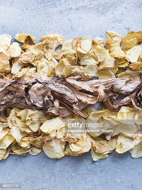 Close up of flower petals lined up in a row, overhead view