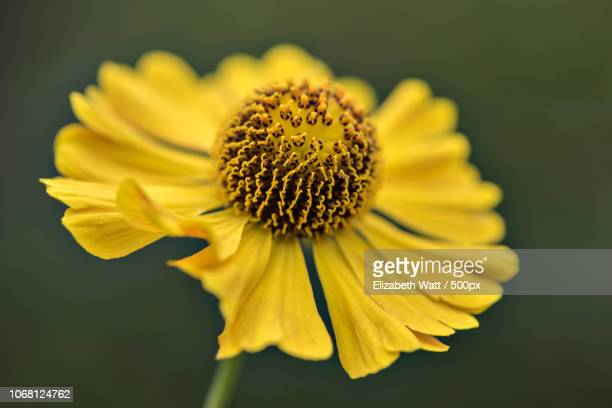 close up of flower - stamen stock pictures, royalty-free photos & images