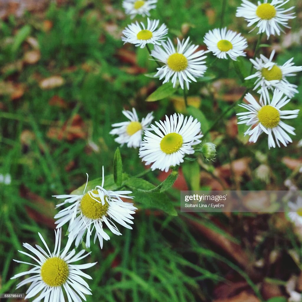 Close Up Of Flowers : Foto stock