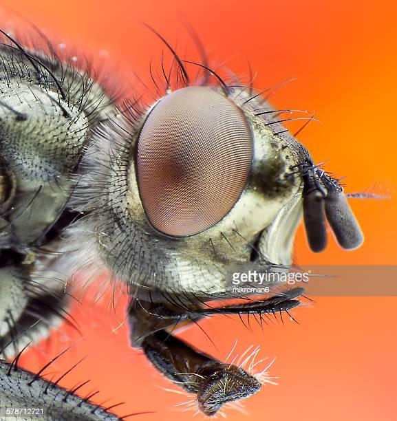 Close Up of Flys Eye