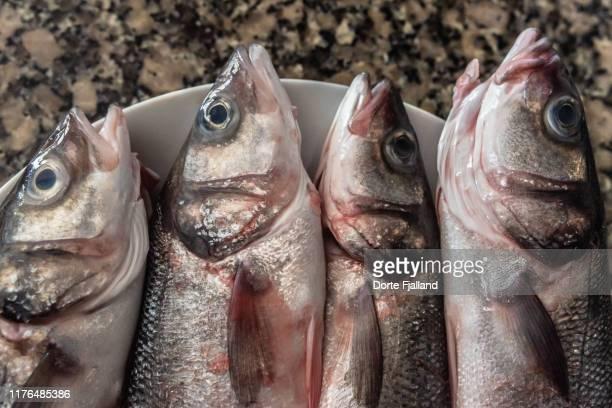 close up of four fresh sea bass on a white plate on a kitchen counter - dorte fjalland fotografías e imágenes de stock