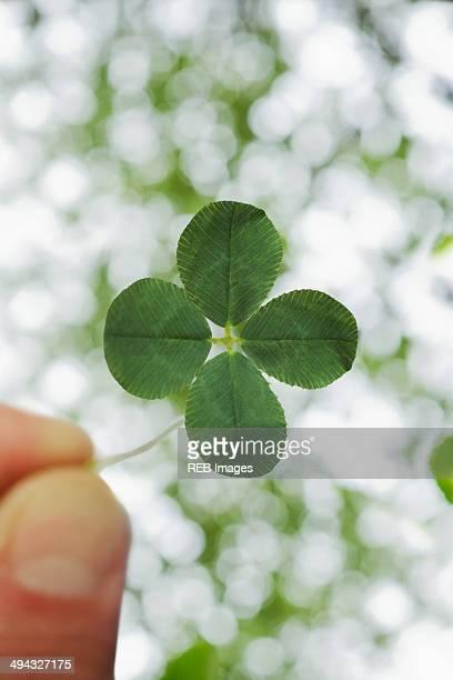 close up of four leaf clover - 4 leaf clover stock-fotos und bilder