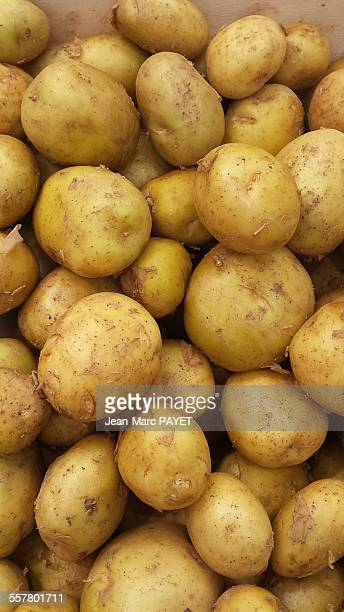 close up of fresh potatoes of noirmoutier - jean marc payet stockfoto's en -beelden