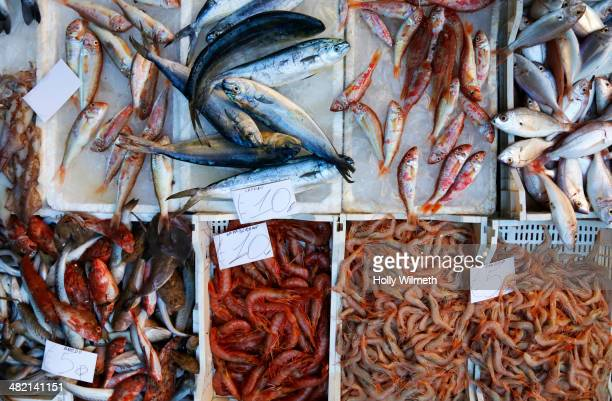 Close up of fresh seafood for sale