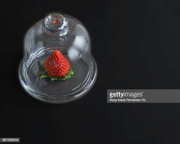Close up of Fresh strawberry in a glass bell on black background. Square format and copy space. Subjects captured against soft window lighting.