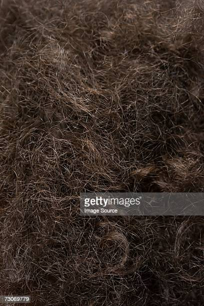 Close up of frizzy hair