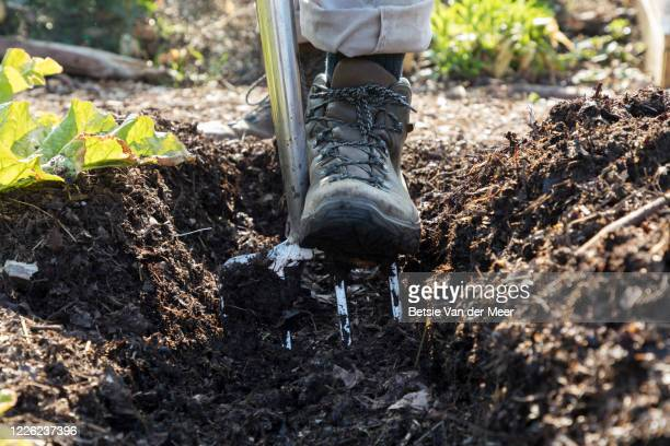 close up of gardener digging ground with gardening fork. - care stock pictures, royalty-free photos & images