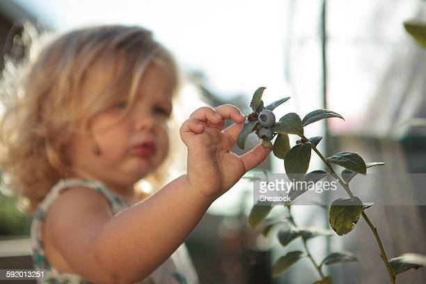 Close up of girl picking blueberries