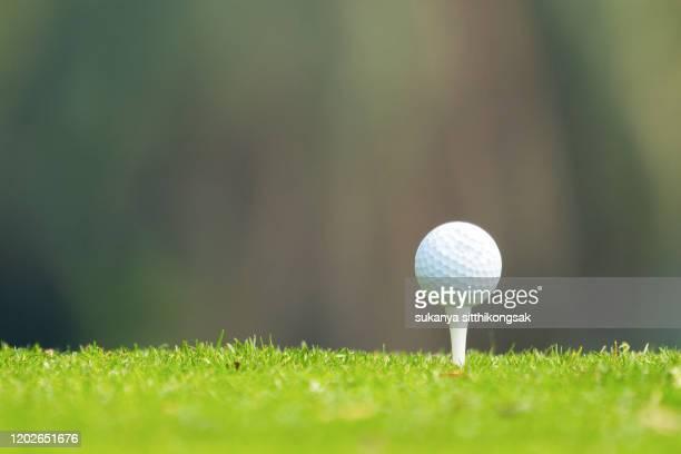 close up of golf ball on a tee. - ゴルフのティー ストックフォトと画像